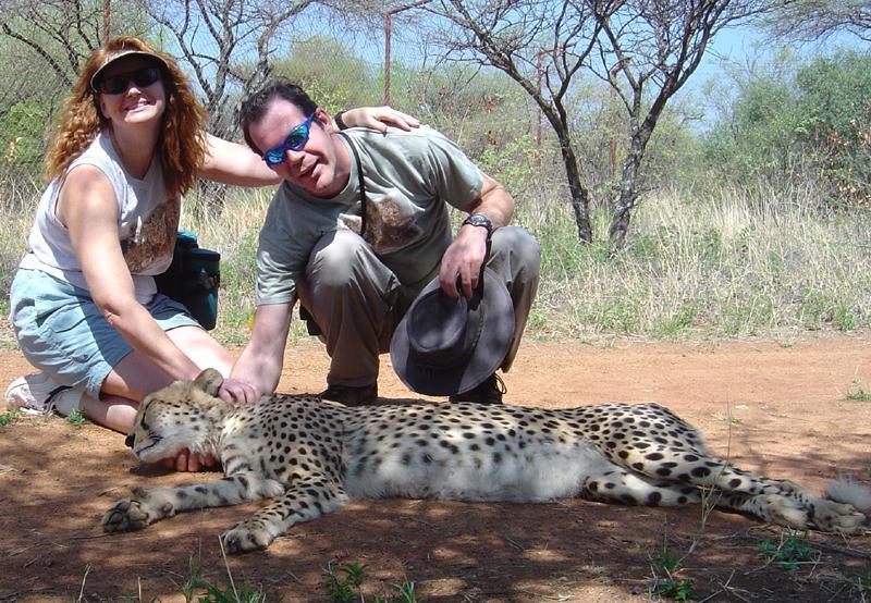 cheetahs Duma and Letotse